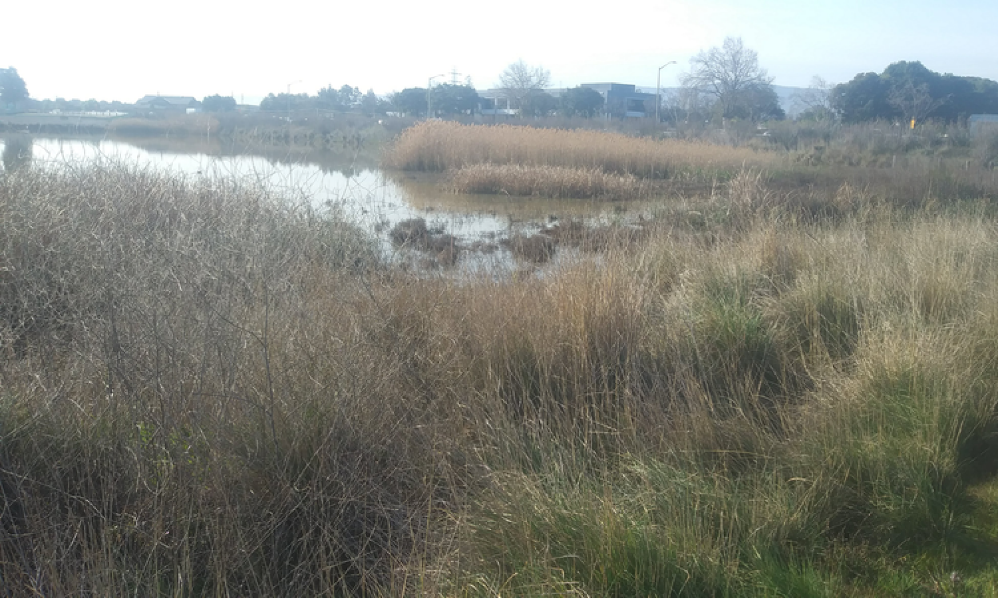 Restoring the Bay -- Palo Alto Shore